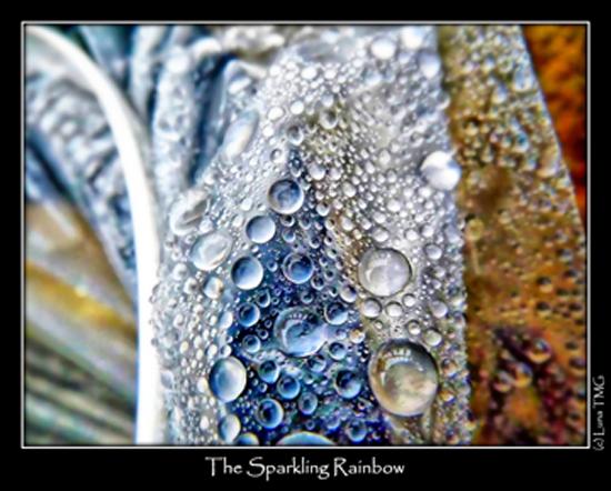 luna_thesparklingrainbow