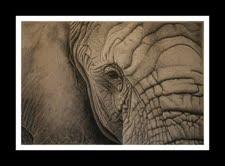 naomieastment_elephant