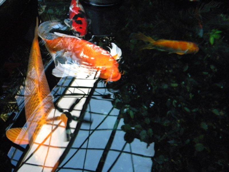 light-fish-in-the-skysmall-jpg
