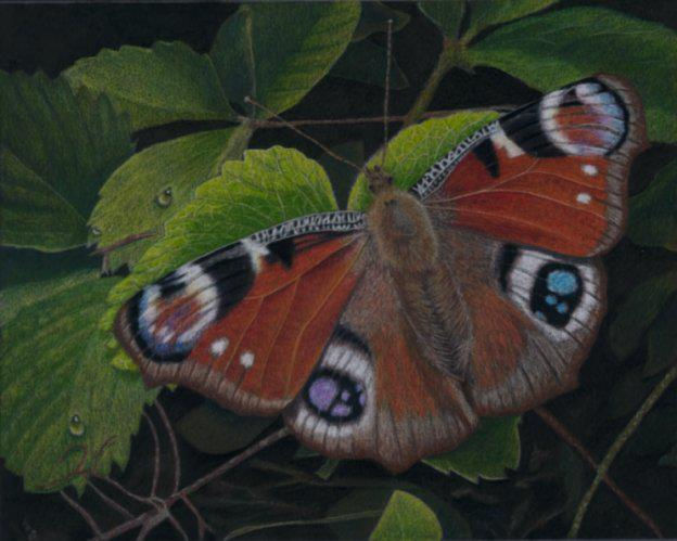 naomieastment_butterfly