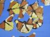 kevinhosseini_butterflies