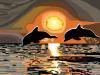Pamela Williamson Dolphins in Golden Sunset