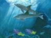 Marcy Deutsch 2 Dolphins Swimming
