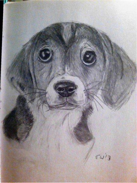 erin_beagle