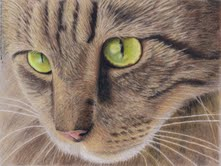 naomieastment_catincolorpencil