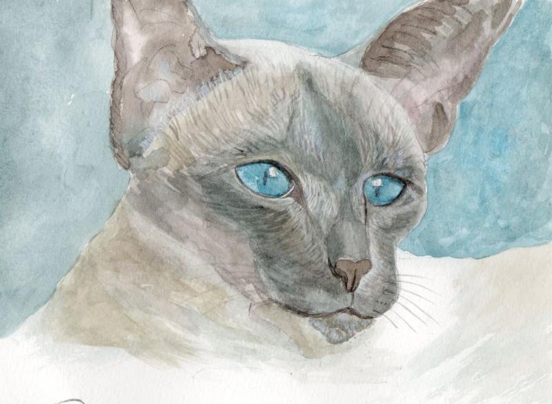 rosemarystephens_cat