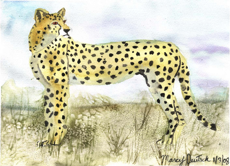 marcydeutsch_cheetah