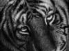 naomieastment_tiger